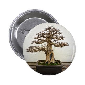 Árbol de los bonsais de la granada pins