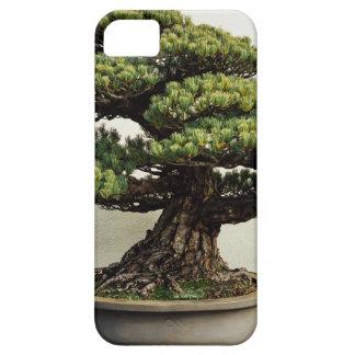 Árbol de los bonsais de White Pine del japonés Funda Para iPhone SE/5/5s