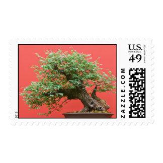 Árbol de los bonsais de Zelkova Timbres Postales