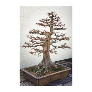 Árbol de los bonsais del arce lona estirada galerías
