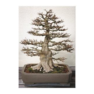Árbol de los bonsais del arce impresion de lienzo