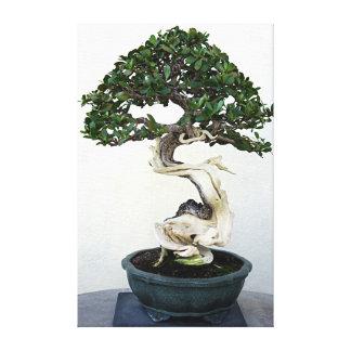 Árbol de los bonsais del Buttonwood Impresión En Lona Estirada