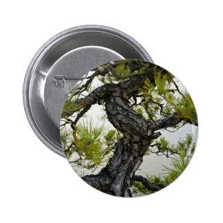 Árbol de los bonsais del pino rojo japonés