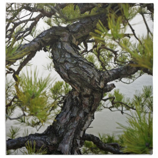 Árbol de los bonsais del pino rojo japonés servilletas de papel