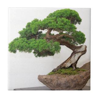Árbol de los bonsais natural azulejo cuadrado pequeño