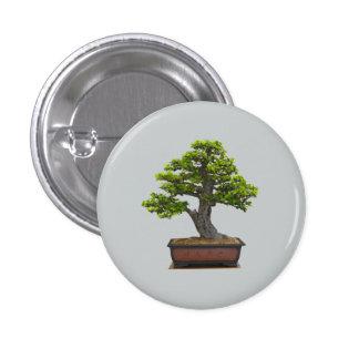 árbol de los bonsais pin redondo 2,5 cm