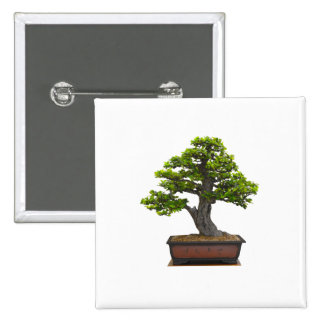 árbol de los bonsais pin cuadrada 5 cm