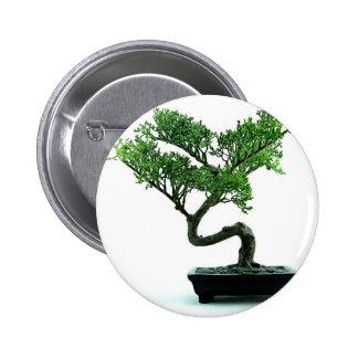 Árbol de los bonsais pin