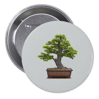 árbol de los bonsais pin redondo 7 cm