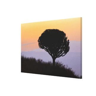 Árbol de los candelabros silueteado en la salida d impresión en tela