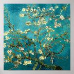 Árbol de los flores de la almendra de Van Gogh Poster