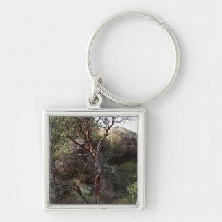 Árbol de Manzanita Llavero Cuadrado Plateado
