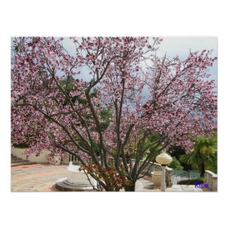 Árbol de melocotón en la floración - castillo 2005 póster