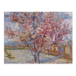 Árbol de melocotón rosado en el flor (reminiscenci tarjetas postales