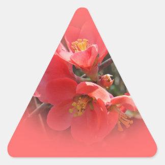 Árbol de membrillo de florecimiento calcomanía trianguladas personalizadas