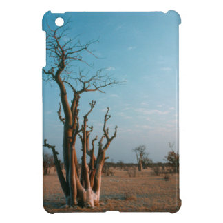 Árbol de Moringo del africano en el llano,