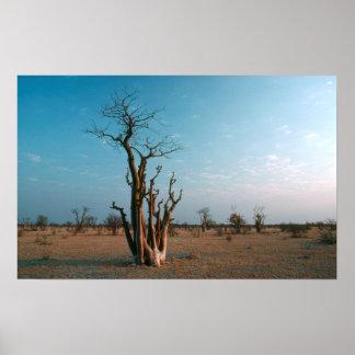 Árbol de Moringo del africano en el llano, Póster