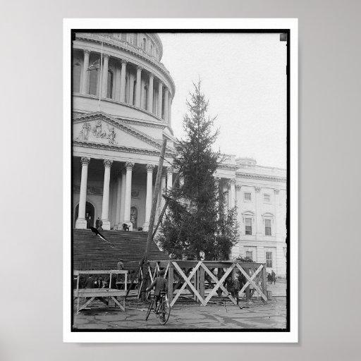 Árbol de navidad del Washington DC Póster