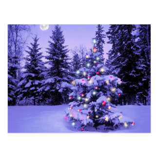 Árbol de navidad en el bosque postales