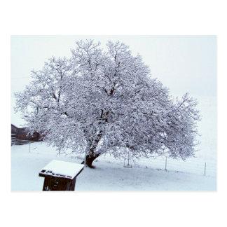 Árbol de nuez después de nevadas postal