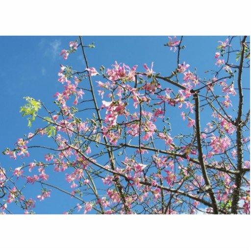 Árbol de orquídea con el cielo azul esculturas fotograficas