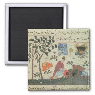 Árbol de pimienta de ms Pers 332 y pimienta de la  Imán Cuadrado
