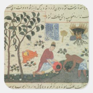 Árbol de pimienta de ms Pers 332 y pimienta de la Pegatina Cuadrada