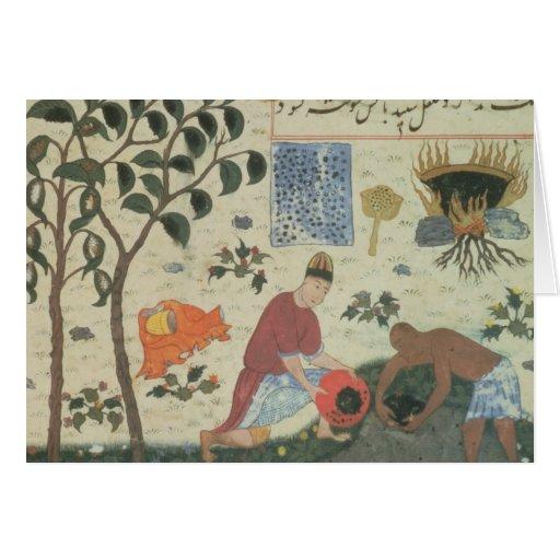 Árbol de pimienta de ms Pers 332 y pimienta de la  Tarjetón