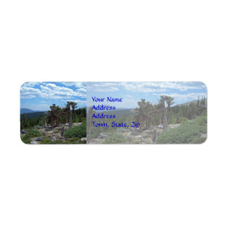 Árbol de pino de Bristlecone Etiqueta De Remitente