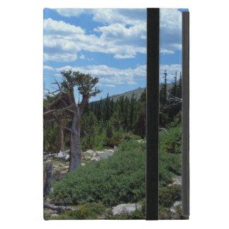 Árbol de pino de Bristlecone iPad Mini Cobertura
