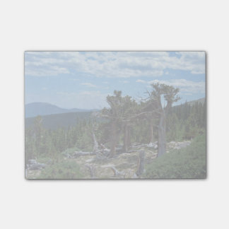 Árbol de pino de Bristlecone Notas Post-it
