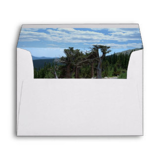 Árbol de pino de Bristlecone Sobre