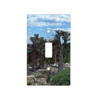 Árbol de pino de Bristlecone Tapa Para Interruptor