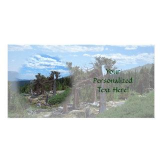 Árbol de pino de Bristlecone Tarjeta Fotográfica