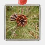Árbol de pino de Monterey con los conos del pino Ornaments Para Arbol De Navidad