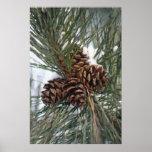 Árbol de pino de Pinecones en la impresión de la n Posters