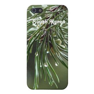 Árbol de pino iPhone 5 carcasas