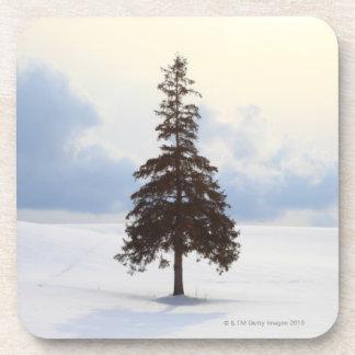 Árbol de pino, Hokkaido Posavasos