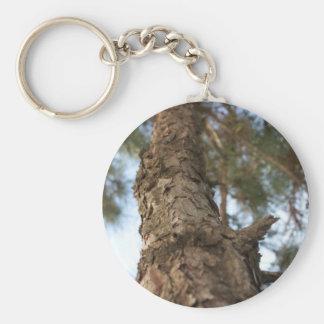 Árbol de pino llaveros