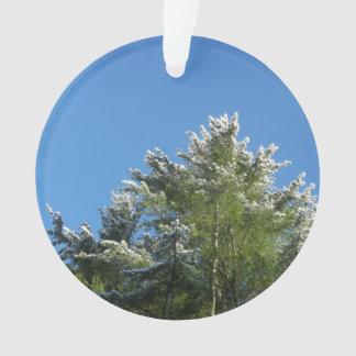 árbol de pino Nieve-inclinado en el cielo azul