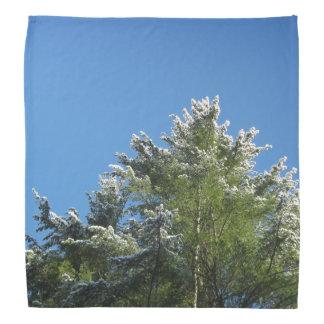 árbol de pino Nieve-inclinado en el cielo azul Bandanas