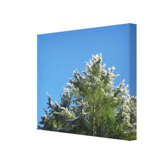 árbol de pino Nieve-inclinado en el cielo azul Impresión En Lienzo
