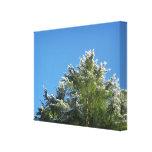 árbol de pino Nieve-inclinado en el cielo azul Impresion En Lona