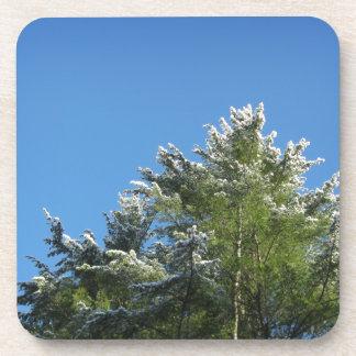 árbol de pino Nieve-inclinado en el cielo azul Posavasos