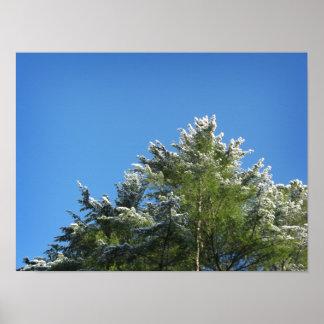 árbol de pino Nieve-inclinado en el cielo azul Póster