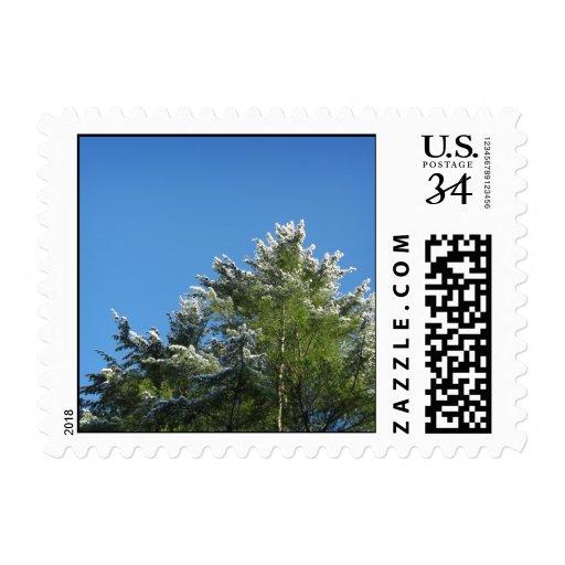 árbol de pino Nieve-inclinado en el cielo azul - Sello