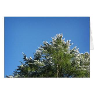 árbol de pino Nieve-inclinado en el cielo azul Tarjeta De Felicitación