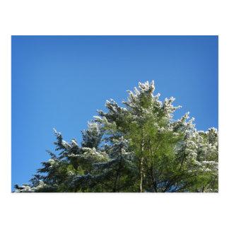 árbol de pino Nieve-inclinado en el cielo azul Tarjetas Postales