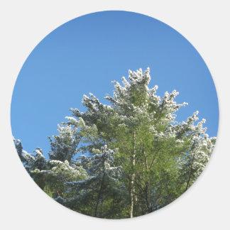 árbol de pino Nieve-inclinado en los sellos del Pegatina Redonda