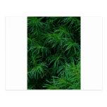 Árbol de pino postal